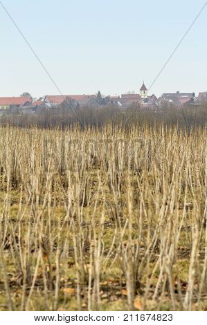 distant view of a small village named Uebrigshausen in Hohenlohe a area in Southern Germany at eyrly spring time