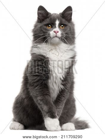 Grey and white cat, 5 months old, sitting in front of white background