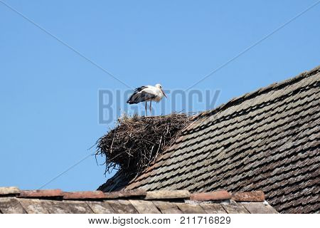 CIGOC, CROATIA - JUNE 18: White Stork and nest on top of refurbished wooden houses in european stork village Cigoc, Croatia on June 18, 2016.