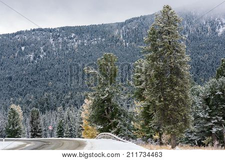 Federal highway M-52 Chuysky tract, asphalted road with markings among the autumn trees covered with snow. Russia, the Altai Republic.