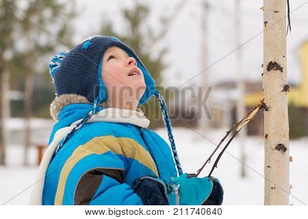 A child boy takes a walk in a winter forest (park) interested in birch twigs
