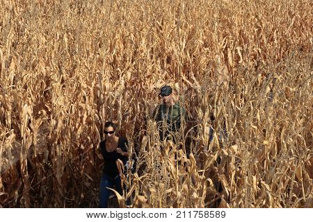 DENVER, COLORADO - OCTOBER 19, 2008: A couple walking through the corn maze on fall day near Denver, Colorado
