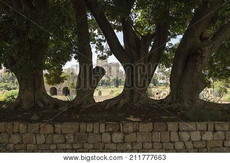 Massive trees on a stone wall with Tyre city in the background, Tyre, Sour, Lebanon