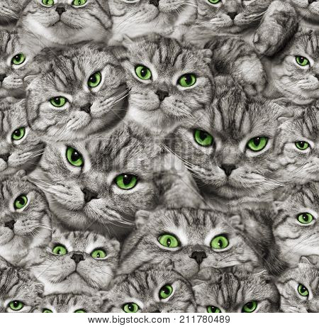 The texture of the cat's muzzle is Scottish Fold. Seamless.