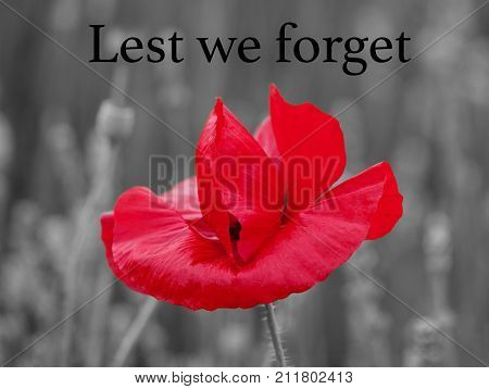 Single red poppy with a defocused black and white background of flowers and leaves with Lest we forget text. Poppy is a military symbol remembering those who died in war.