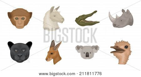 Wild animal icons in set collection for design. Mammal and bird vector symbol stock  illustration.