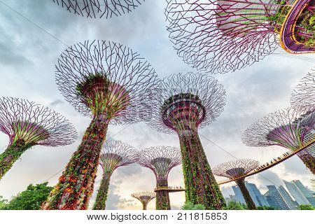 Fantastic Bottom View Of The Supertree Grove With The Skyway