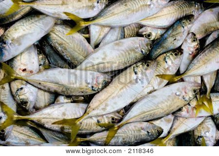 Fresh Fish For Sale.