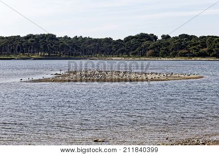 the island of the seagulls against trees