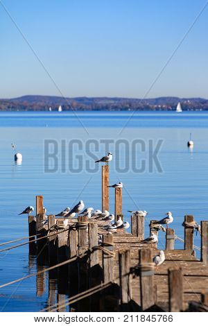 Seagulls enjoy the autumn sun on a footbridge at the foot of the Ammersee