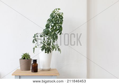 Composed flowerpot house plant on bedside tables. Creative arrangement of flowerpot with green plant composed on wooden seat.