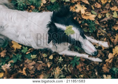 Cute dog with leaf on her head