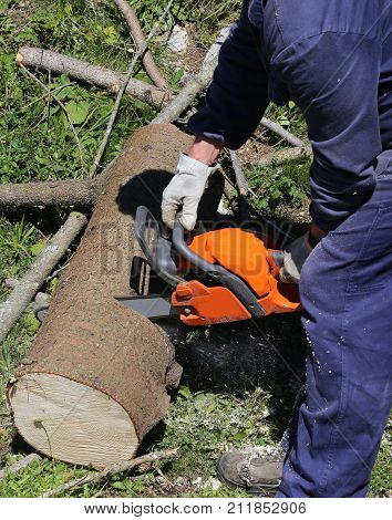 Woodcutter With Protective Workwear And Gloves While Cutting A T