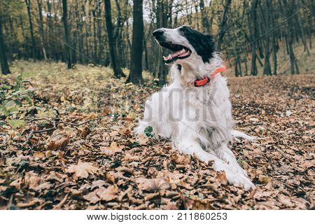 Happy Dog in forest