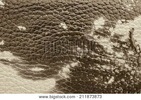 abstract background of rough spotty texture of natural leather closeup brown tone sepia