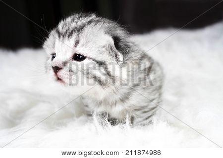 Curious kitten. Baby kitten is curious kitten.