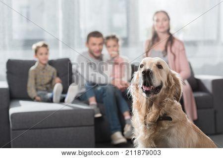 Dog On Foreground