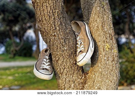 old canvas sport shoes hanging on tree
