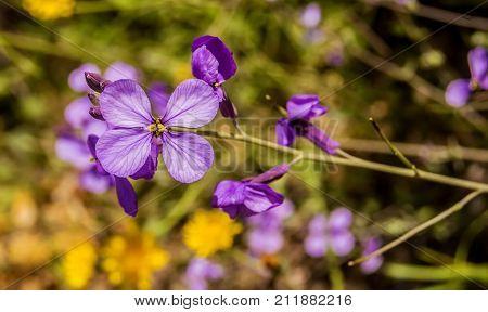 Flores silvestres al aire libre en primavera.