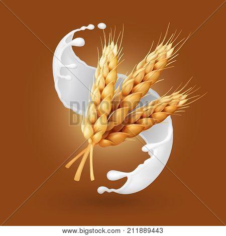 Wheat and milk splash. Barley cereals in yogurt illustration. Realistic vector icon.