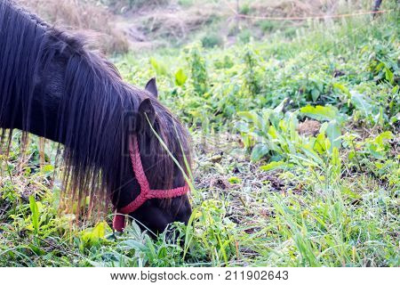 Horse on summer pasture.Horse pasture in the meadow