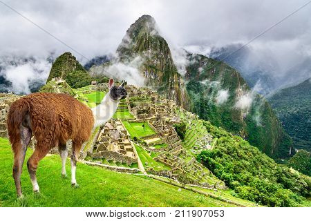 Machu Picchu Peru - Ruins of Inca Empire city and Llama animal in Cusco region amazing place of South America.