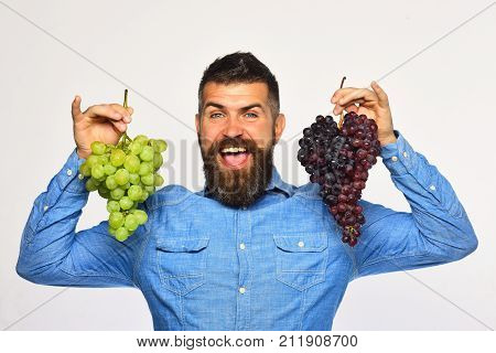 Farmer Shows His Harvest. Winegrower With Cheerful Face Holds Grapes
