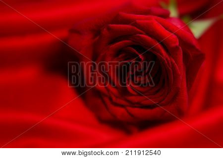 Natural red rose flower background with blured foreground