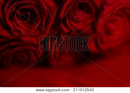 Natural red rose flower background with bkured foreground