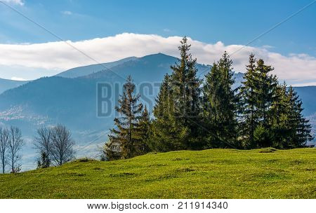 Spruce Tree On Grassy Hillside