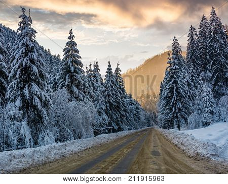 Asphalt Road Through Spruce Forest At Sunset