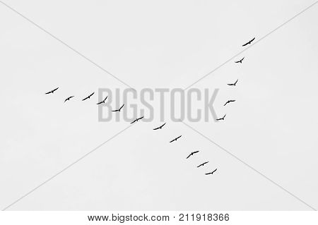 Birds in a vee formation. V formation of birds. Flying birds: migration