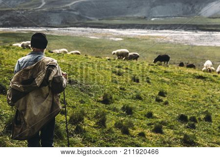 Shepherd With Sheep On The Field In Mountains Rear View. Agriculture Concept