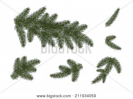 set: Xmas tree branches. Christmas and Happy New Year décor . Isolated without a shadow. Fir tree branches.vector illustration. Eps 10