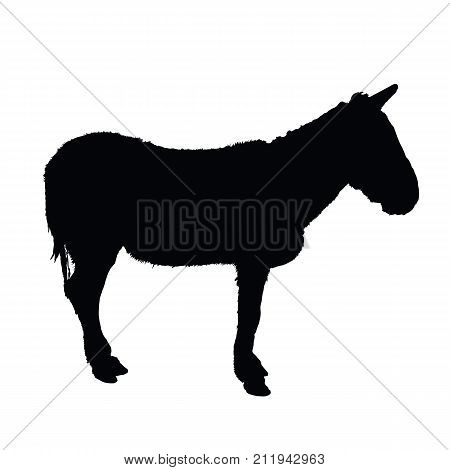 Simple donkey vector silhouette on white background.