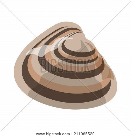 Shell or seashell and sea or ocean mollusk. Bivalve and gastropod shell different shape or type with ornate edge. Vector isolated flat icon with natural pattern