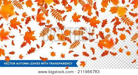 Autumn falling leaves pattern on transparent background. Vector autumnal foliage fall of maple rowan or chestnut and poplar leaf flying in wind motion blur. Orange design for autumn design