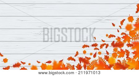 Autumn Leaf Fall Pattern Autumanl Falling Leaves On Vector Wooden Background