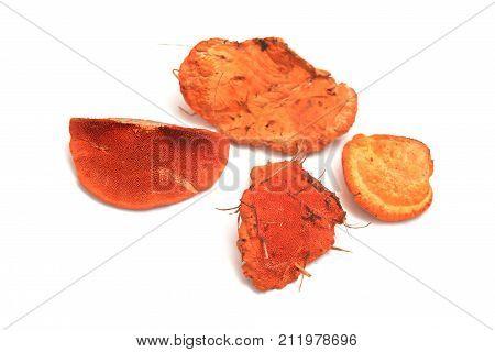 Pycnoporus cinnabarinus fungus or the cinnabar polypore
