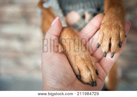 Dog paws and human hand close up. Conceptual image of friendship