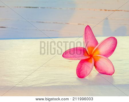 Plumaria , Frungipani Flower On White Wood Background Surface