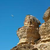 seagull in blue sky near sandstone cliff poster