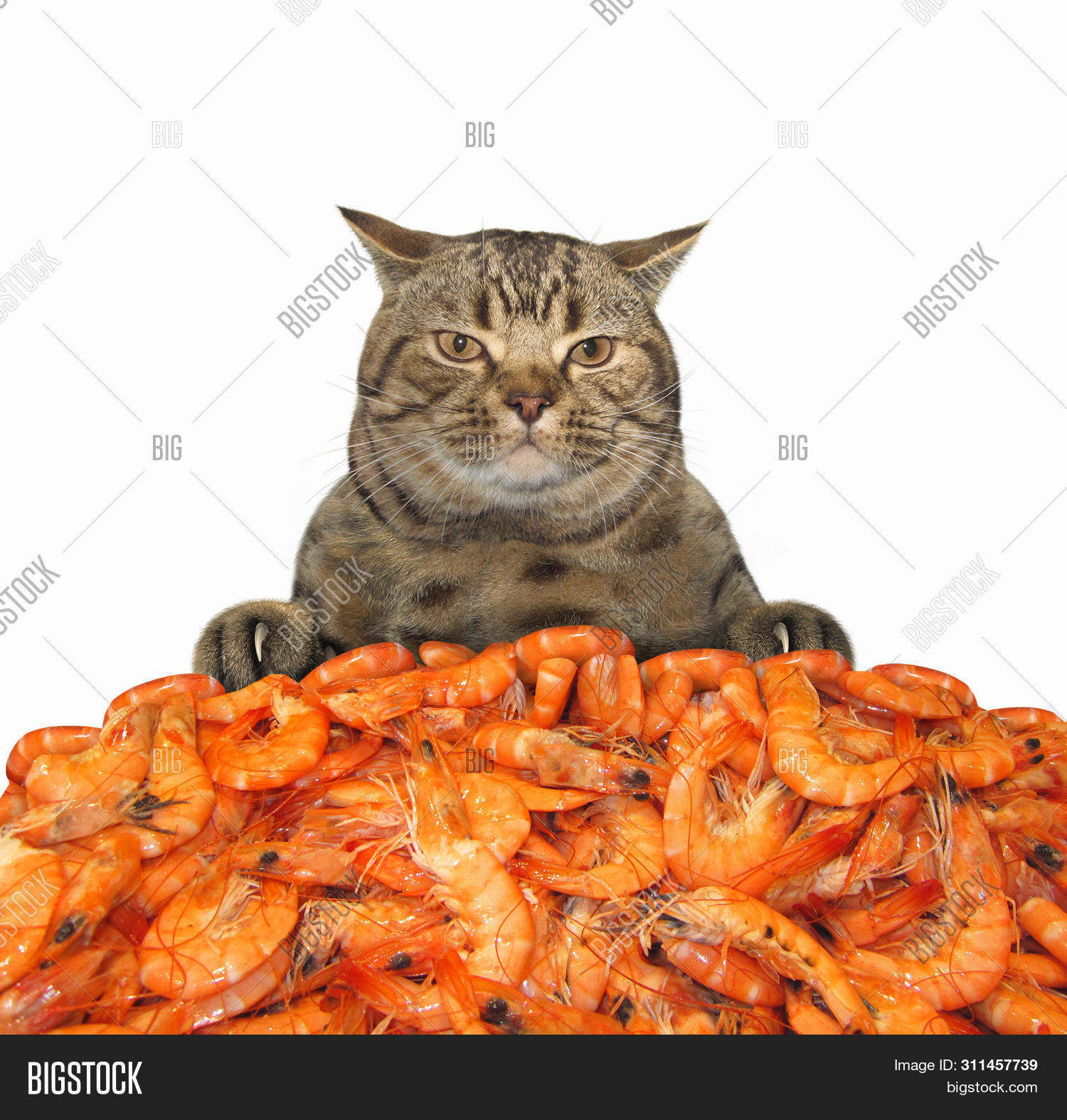 Hungry Cat Behind Pile Image & Photo (Free Trial) | Bigstock
