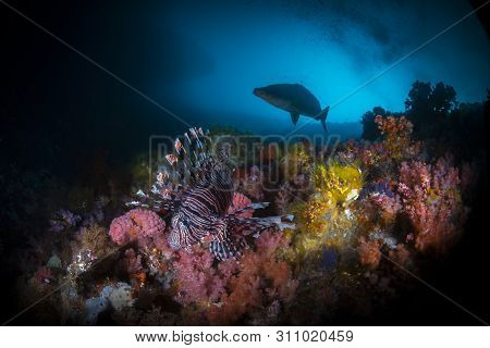 A Beautiful Lion Fish With Corals And Colourful Vibrant Colours