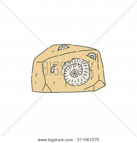 Stone With Fossilized Prehistoric Animals Like Ammonites Sketch Style