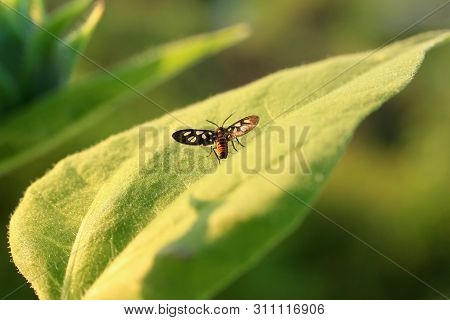 Nature Background Butterfly. Butterfly Insect In Nature. Nature Insect Little Butterfly On Big Green