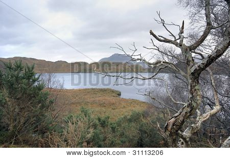 Awry Tree In Scottish Landscape