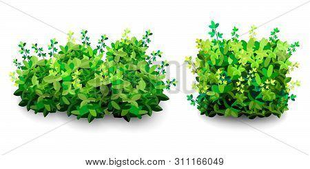 Garden Bush. Green Garden Vegetation Bushes Icon. Ornamental Plant Shrub For Decorate Landscape Park