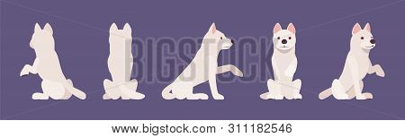 White shepherd dog giving paw, sitting. Working active breed, family companion for disability assistance, search, rescue, police, military help. Vector flat style cartoon illustration, different view poster