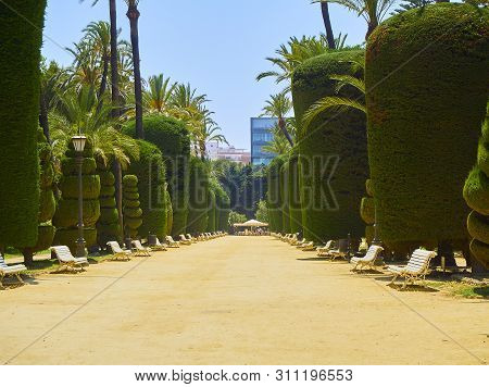 Cadiz, Spain - June 23, 2019. Genoves Park, Botanical Garden Of Cadiz. Andalusia, Spain.